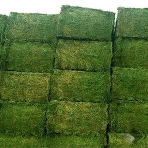 alfalfa hay for sale
