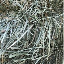 horse hay for sale