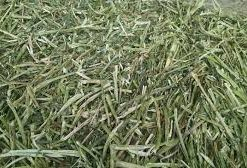 hay rake for sale
