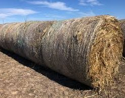 Sudan Grass Hay For Sale